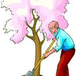 OLDER MAN DIGGING AROUND TREE